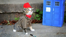 axn-cats-dogs-costumes-1600x900_0