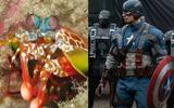 axn-heroes-irl-animals-1