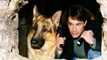 axn-most-loveable-pets-in-tv-history-1600x900