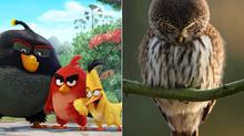 axn-real-angry-birds-1600x900